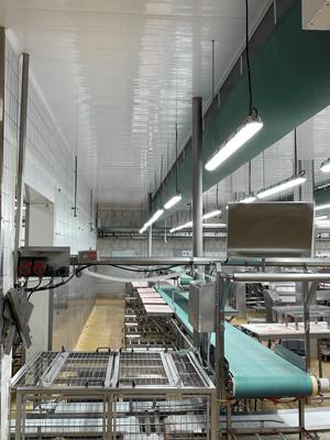plafons rénovés dans industrie agro-alimentaire